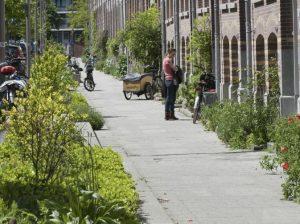 Voorbeeldfoto van een woonstraat met links een groenstrook en rechts geveltuinen
